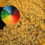 미세먼지 걱정 덜어준 반가운 가을비