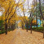 군포시 궁내동 '단풍·낙엽거리' 조성