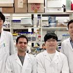 인하대 교수팀, 생체 모사 인공세포막 융합기술로 차세대 물 정수 시스템 개발