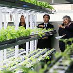 과천시, 취약계층 일자리 창출 위한 사회적 경제형 식물공장 문 열어