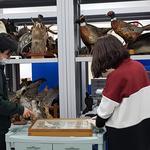 문성학원 자연박물 표본 5천631점, 강화자연사박물관 이관