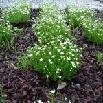 국립수목원, '봄꽃 한겨울에 만나요'
