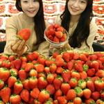 신선한 설향 딸기 맛보세요