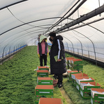 남양주시농업기술센터, 영농 현장 혼선 줄이기 위한 현장지원단 운영