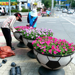 안양시 주요 교차로와 공원 등에 봄꽃 식재