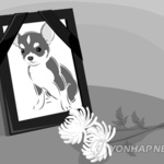 '다 싫다는' 반려동물 장묘시설 용인시 복합공간으로 조성 추진