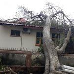 '사이클론 강타' 모잠비크 베이라의 쓰러진 나무