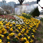 성큼 다가온 봄… 거리도 꽃단장