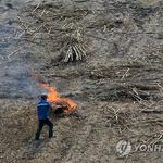 논밭 태우면 해충 없어진다고? 되레 '천적' 사라지고 불날 위험