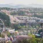 벚나무 1만여 그루가 만든 봄의 절경