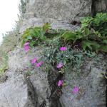 국립수목원, 국가표준식물목록에 북한명 함께 수록