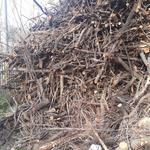 의정부 조경업체, 국유지에 임목폐기물 쌓아 뒀다