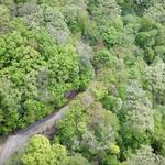 국립수목원, 광릉숲 분포 졸참나무 꽃 만개 영상 일반 공개