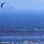 인천 바다서 즐기는 카이트 서핑