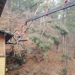 가평군, 주택가 주변 피해 우려 나무 제거사업 큰 호응