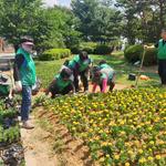 평택시 세교동 도로변 가로화단에 여름꽃 식재사업