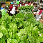 구슬땀 흘리는 어린이 농부들
