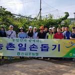 신김포농협 직원들, 영농철 일손 돕기에  '구슬땀'