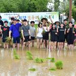 인천 부평도시농업네트워크, 토종 자광벼 손 모내기 행사 실시