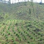 수원국유림관리소, 8월 말까지  665ha 조림지가꾸기 사업 진행