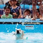 세계수영선수권 성공 기원하며 '개헤엄'