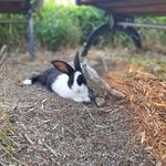 성남시청 공원 '토끼 가족' 5마리 둥지 틀고 시민들 맞는다