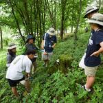 국립수목원,여름방학을 맞아 '산림생물학교' 운영
