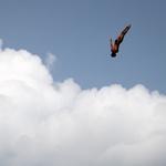 '지금 낙하합니다' 선수가 사인 보내면 잠수부 네 명이 물보라를 만든다