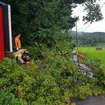 지하차도 잠기고 나무 쓰러지고… 인천지역 주말 곳곳 폭우 피해