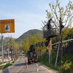 인천시 강화군,여름철 강풍 및 호우에 대비해 가로수 정비사업 추진