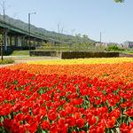 울창한 나무·꽃이 반기는 마을 곳곳 '푸른 쉼터'로
