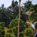 인천시 야생동물구조관리센터 500일 동안 523마리 구조 성공