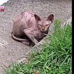 """스핑크스 고양이 가격 , 한때 가족이었을텐데 , """"버려지면 죽음으로"""""""