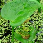 개구리의 휴식시간