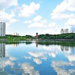 내리는 빗물 모아 환경 가꾸고 열섬 줄이는 도시숲 키운다