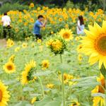 추석 연휴, '꽃·역사·문화의 도시 수원'  볼거리·먹거리 즐기세요